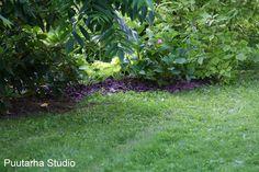 Sarin puutarhat: Violetti koristekate kuorikate parkki