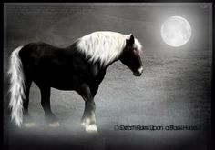 Dark Horse by Subaru09.deviantart.com on @DeviantArt