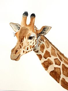 Draw Animals giraffe original watercolor painting giraffe painting animals of Africa painting - This is my original watercolor painting. Image shows a giraffe. Size cm I use is Fabriano vertical orientation Giraffe Drawing, Giraffe Painting, Giraffe Art, Animal Paintings, Animal Drawings, Art Drawings, Pencil Drawings, Watercolor Animals, Watercolor Paintings