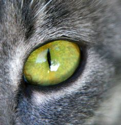 catseye by jmtimages, via Flickr