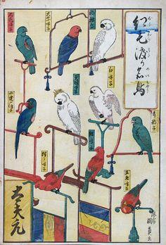 Oranda watari meichô (Fine birds imported from foreign lands) ・ Kunikazu