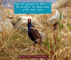 Fooling around on April 1 – #Aprilfoolsday | grevilleacorner