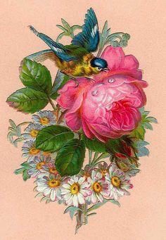 Rose Blue bird vignette