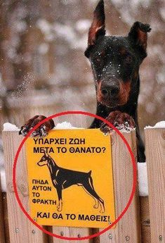 Greek Memes, Funny Greek, Greek Quotes, Best Funny Pictures, Funny Photos, Big Cats Art, Funny Expressions, Dog Memes, Photo Quotes