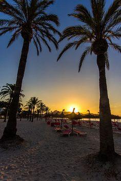 Palmeira Sunrise | Flickr - Compartilhamento de fotos!