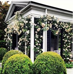 Climbing roses and sculpted shrubs