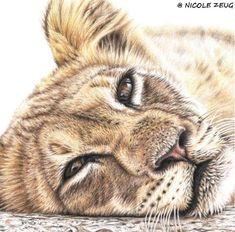 PAINTING -  FEMALE LION  (Leeuwin)