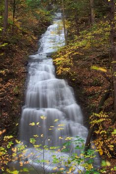 This is a place I hope to visit.  Fillmore Glen State Park, NY