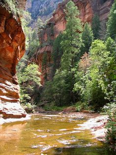The West Fork of Oak Creek Canyon, (between Sedona and Flagstaff). Our favorite hiking spot up north.