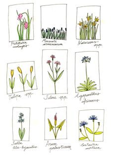 botánica I