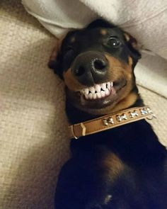 This smile is for real.