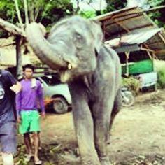 słoniki w TAJLANDII są bardzo często widywane!