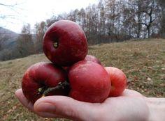Mi történik, ha egy almát teszel a levesbe Plum, Apple, Fruit, Apple Fruit, Apples