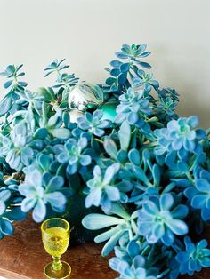 Ghost Plant // This lovely foliage plant is easy to grow and propagate; simply snip off a leaf or the end of a shoot and pot it in barely moist soil. Ghost plant likes a bright spot and the stems can grow a foot or more long.