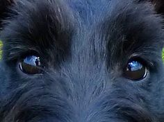 look into my eyes. This look just pierces my heart and tells me to listen up!