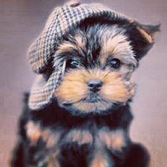 Sherlock's puppy?
