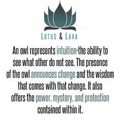 The Owl.