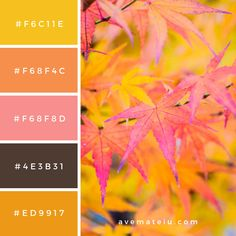 Maple leaf Color Palette – color of life Summer Color Palettes, Color Schemes Colour Palettes, Spring Color Palette, Summer Colors, Summer Flowers, Flat Color Palette, Palette Art, Colour Pallette, Yellow Color Combinations