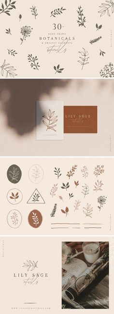 Hand Drawn Botanical Collection by melvolkman on @creativemarket #inspiration #ideas #design #graphicdesign #graphic #floral #flowers #botanical