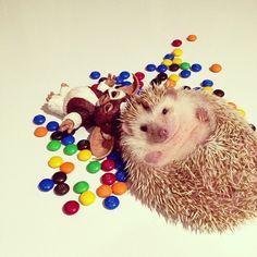 #hedgehog#mogwai#gremlins