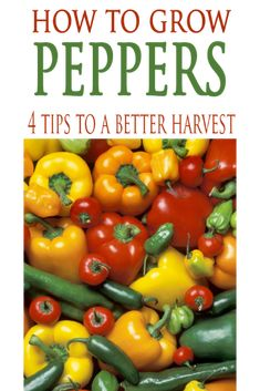 Tips and tricks to get great tasting peppers from your home garden!