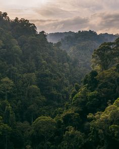 drone icon A sunset in the rainforest in North Sumatra from drone - A guide to what to expect from a jungle trek in Bukit Lawang (North Sumatra, Indonesia) including which animals to see, what to bring, how long to stay, ethical practices and Drone Photography, Nature Photography, Animal Photography, Travel Photography, Orang Utan, Safari Outfits, Nature Landscape, Photocollage, Nature Aesthetic