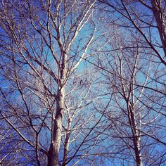 Trees waiting for their leaves & springtime...