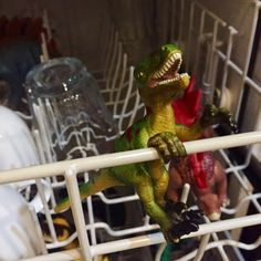Hide the dinosaurs in the dishwasher! Plastic Dinosaurs, Dinosaur Photo, Holiday Fun, Parrot, Kid Stuff, Dishwasher, Shelf, Take That, Bird