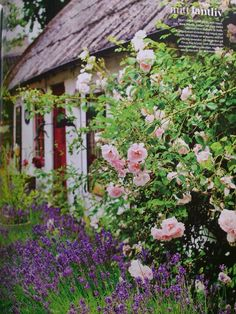 English cottage flowers