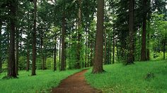 forest park, portland OR