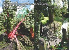 (荷兰)Koudenhoorn镇   附近莱顿市里没有花园的市民把以前空置的土地变成了当地的袖珍菜园,种植有机蔬菜,水果以及季节性的花卉。  照片:Alice de Jong