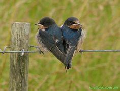 heart in nature. Pretty Birds, Love Birds, Beautiful Birds, Animals Beautiful, Cute Animals, Two Birds, Wild Animals, Baby Animals, Heart In Nature