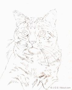 Draw a Majestic Cat in Colored Pencil: Begin Sketching the Outline