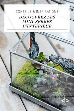 12 Meilleures Images Du Tableau Mini Serre Intérieur Pour