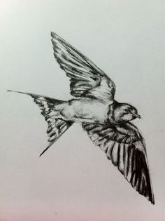 i would literally get another bird tattoo. a huge one like this on my back.