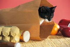 Cats Home Alone? Try These 9 Great Toys: Paper Shopping Bags