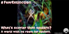Spiders help control insects that destroy food crops for people.  It's Halloween!  People are the scariest animal on the planet!