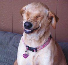 Big Doggie Smile