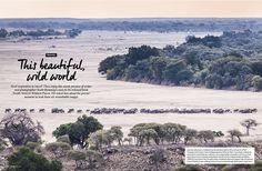 wild-world-scott-ramsay