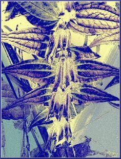 """'Stoffdesign """"floral""""' von Rudolf Büttner bei artflakes.com als Poster oder Kunstdruck $18.02"""
