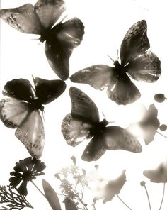 photograms - Reverse Photogram 1 by sofia__maria Dark Room Photography, Black And White Photography, Alternative Photography, Experimental Photography, Cyanotype, Photography Projects, Beautiful Butterflies, Light And Shadow, Light In The Dark