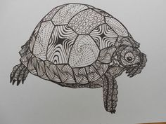 Image result for zentangle turtle