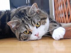 Cat Blogging and Blogging Cats