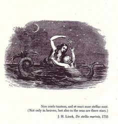 The Mermaid Within - Mystical Mermaid Art Vintage Mermaid, Mermaid Art, Mermaid Prints, Mermaid Poems, Mermaid Hotel, Mermaid Paintings, Tattoo Mermaid, Sirens, Water Nymphs