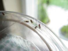 Fruit fly trap. IMG_4079.JPG