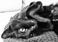 Petit chat docile | Des Goûts et des COULEURS