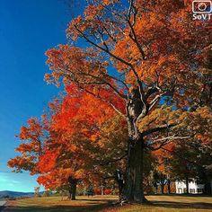 Vermont  ✨ Photographer  @ktrevor✨  #ScenesofNewEngland  Pic of the Day  11.05.15 ✨ C o n g r a t u l a t i o n s ✨ ----------------------------------------- #scenesofVT  #wilmingtonVT #igvermont #vtphotos #vermont_potd  #vermont_fallfoliage  #vermont_explore #explorevermont #travelvermont #visitvermont #fallinVT #fallingforfa...