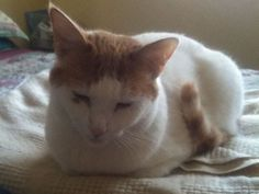 Have you seen Luna the cat from Takoma Park?