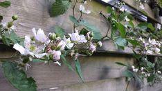 Michel's blog: Arbeidsvitamine  #stadstuin Bekijk meer blogs via www.tuinen.nl Plants, Blog, Blogging, Plant, Planets