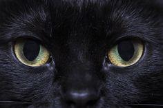 Fotografía Gato por AlberPics  en 500px